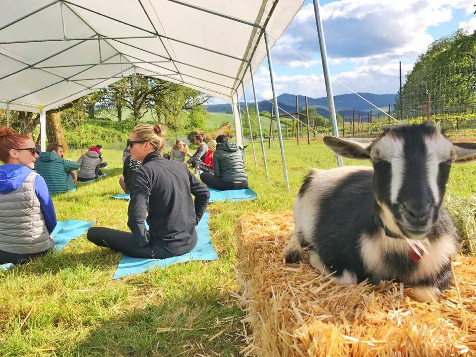 """Goatel"" is a goat hotel from the original folks behind goat yoga"