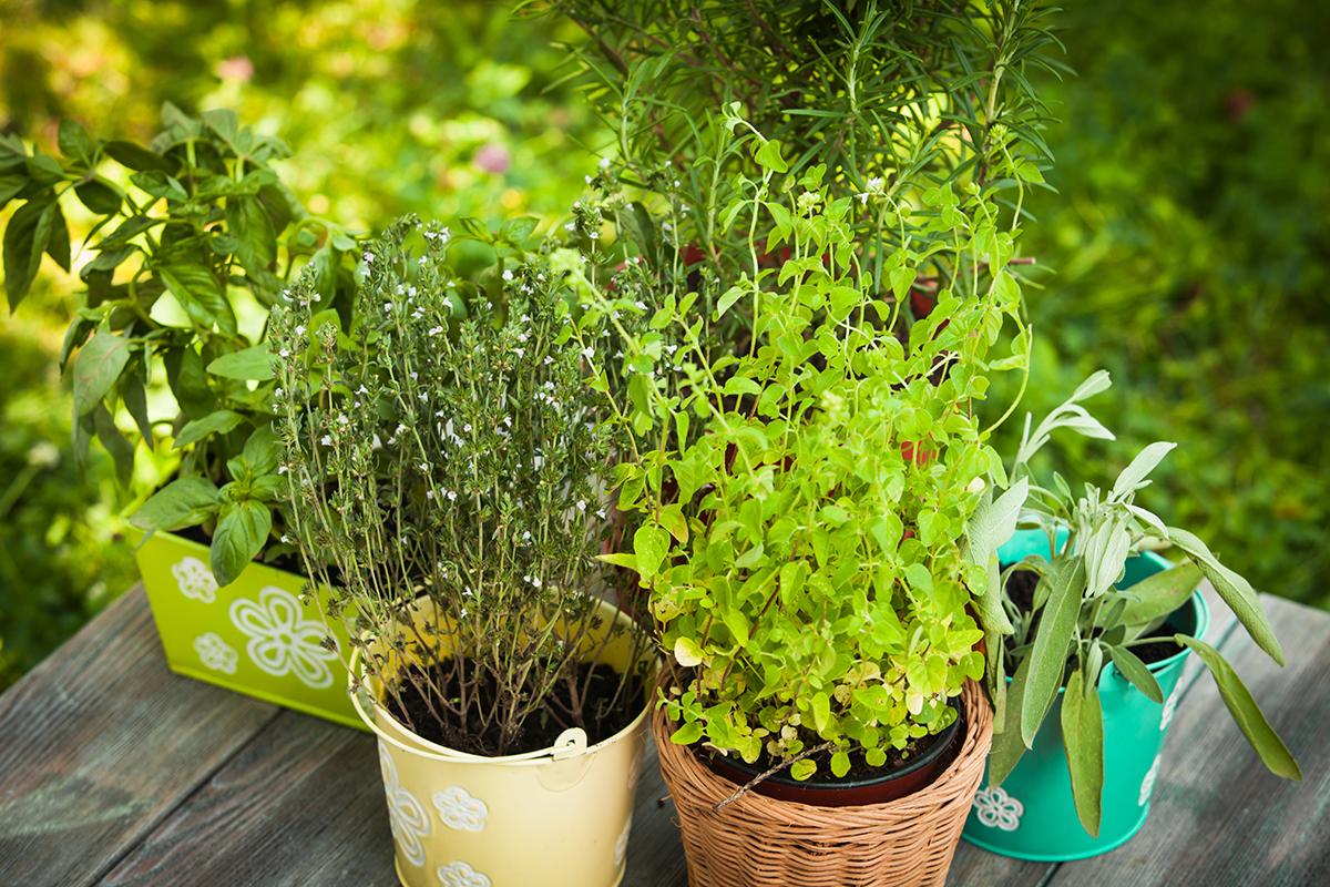 7 Perennial Herbs To Plant Now Modern Farmer