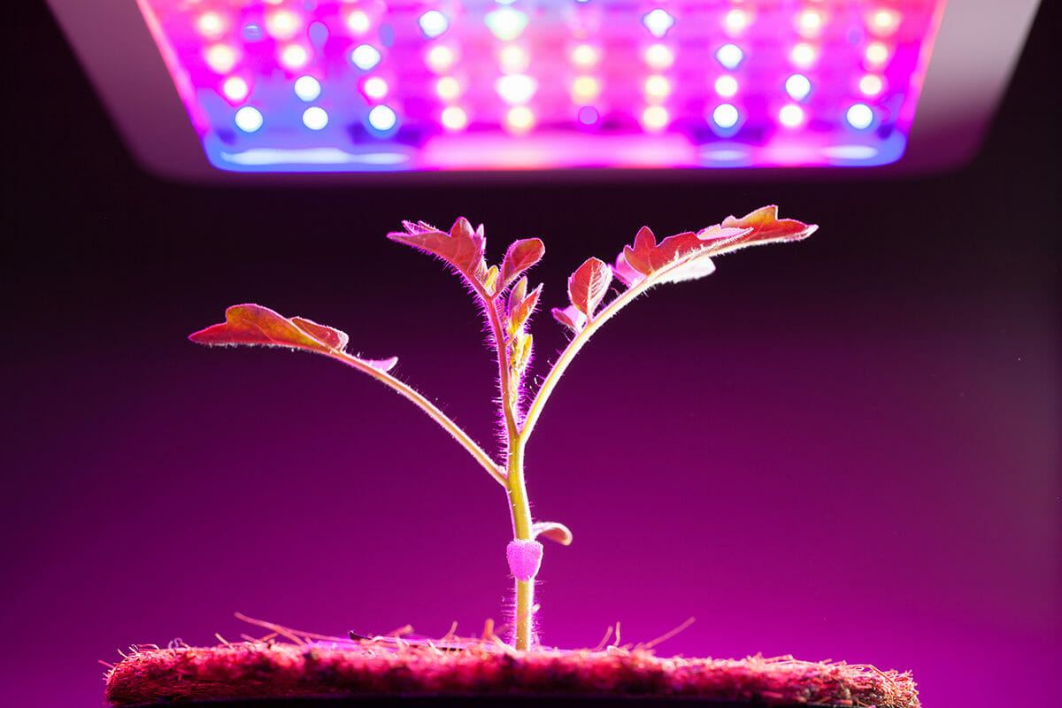 Grow Lights For Indoor Plants And Gardening An