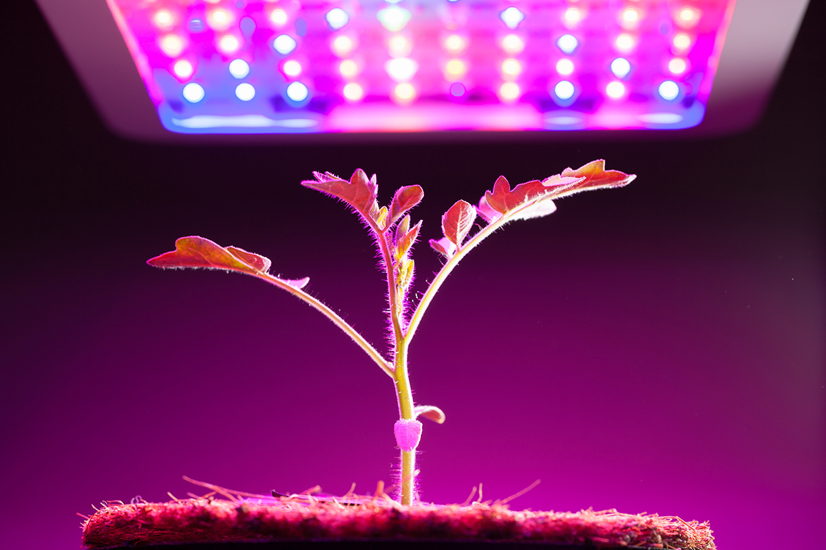 Grow Lights For Indoor Plants And Gardening An Overview Browse Lighting Diagrams That Use A 3 Way Switch Modern Farmer