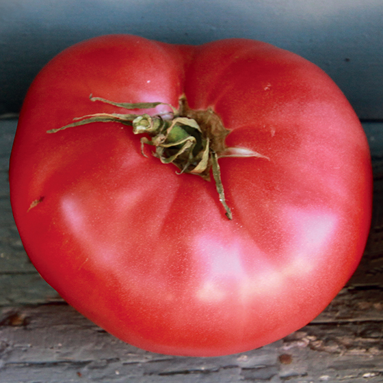 HEIRLOOM-TOMATO-German-Pink_baker-creek