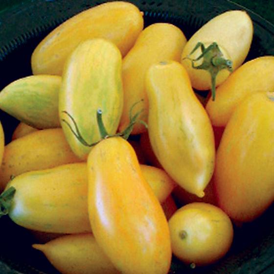 HEIRLOOM-TOMATO-banana-legs_Ibsen-tomatofest