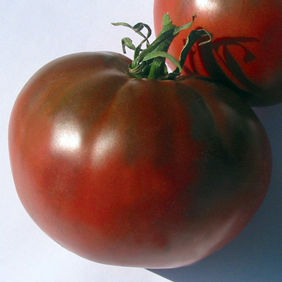 HEIRLOOM-TOMATO-carbon_Ibsen