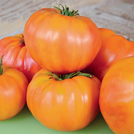 HEIRLOOM-TOMATO-german-yellow_territorial