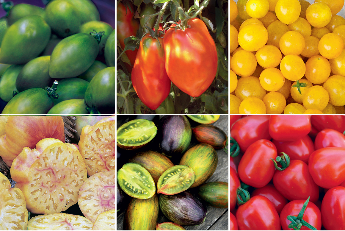 heirloom tomato variety handbook