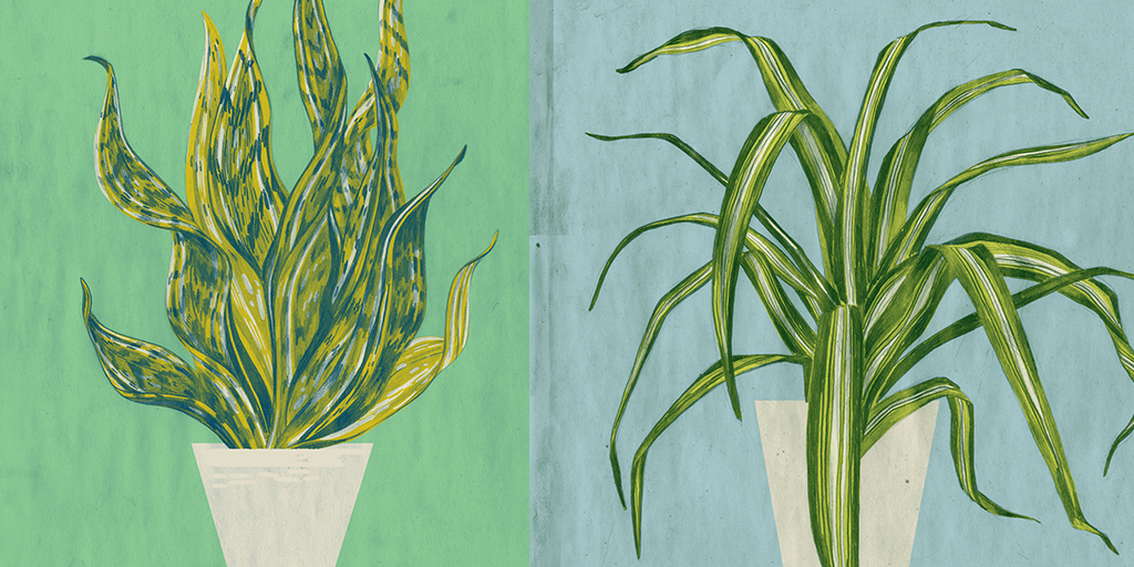 The 5 Best Houseplants To Purify Air In Your Home