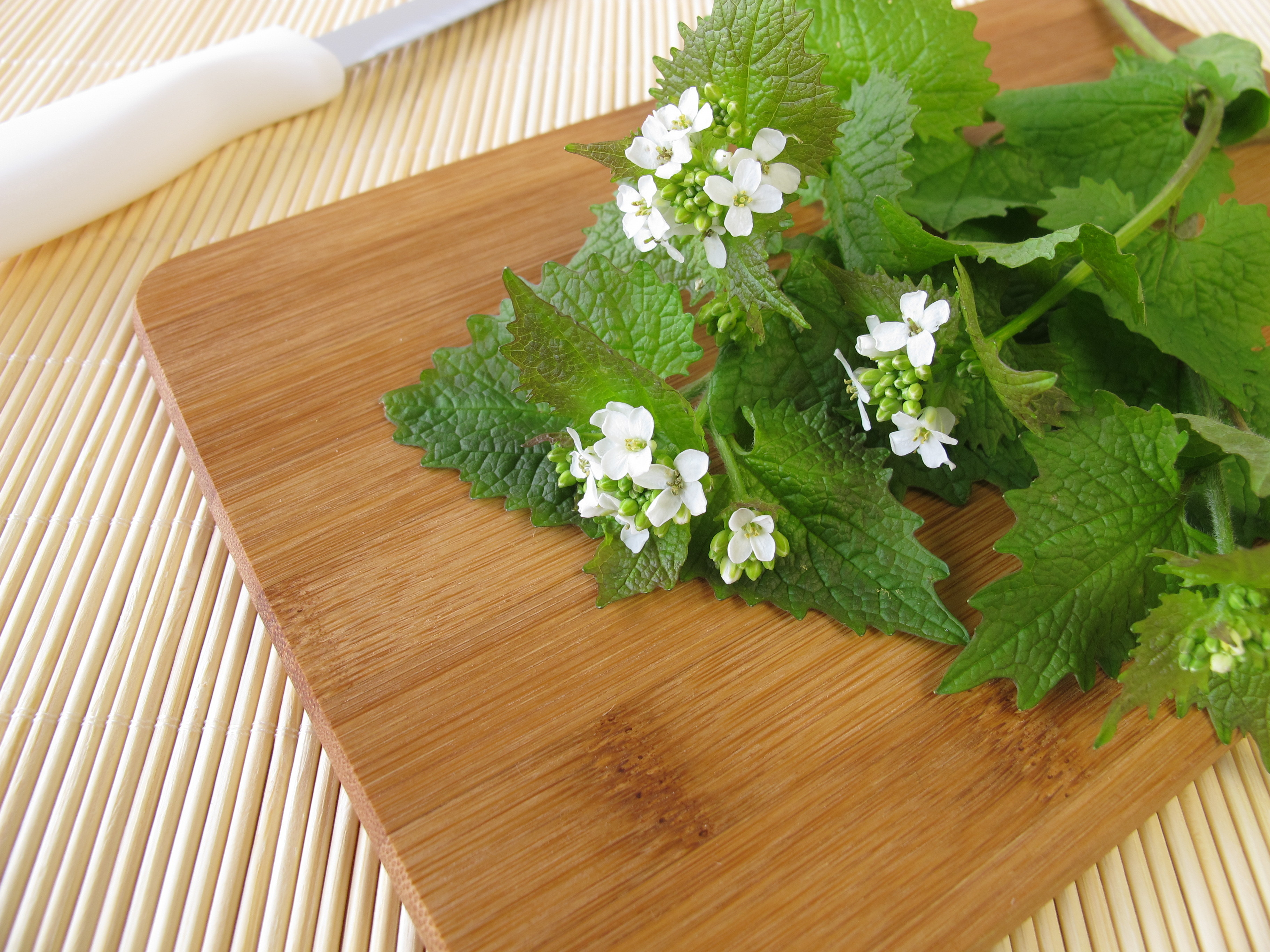10 Edible Weeds Likely Growing in Your Yard - Modern Farmer