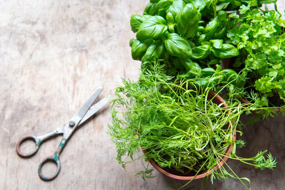 8 Indoor Crops For Winter Gardening Modern Farmer