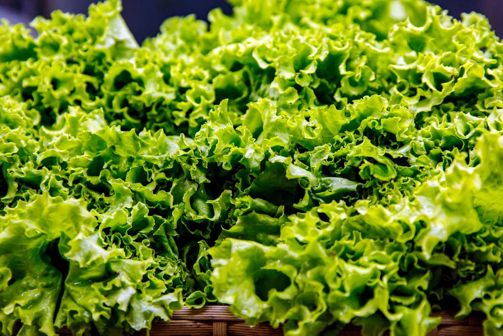 CDC Tells Consumers to Avoid Romaine Lettuce Yet Again