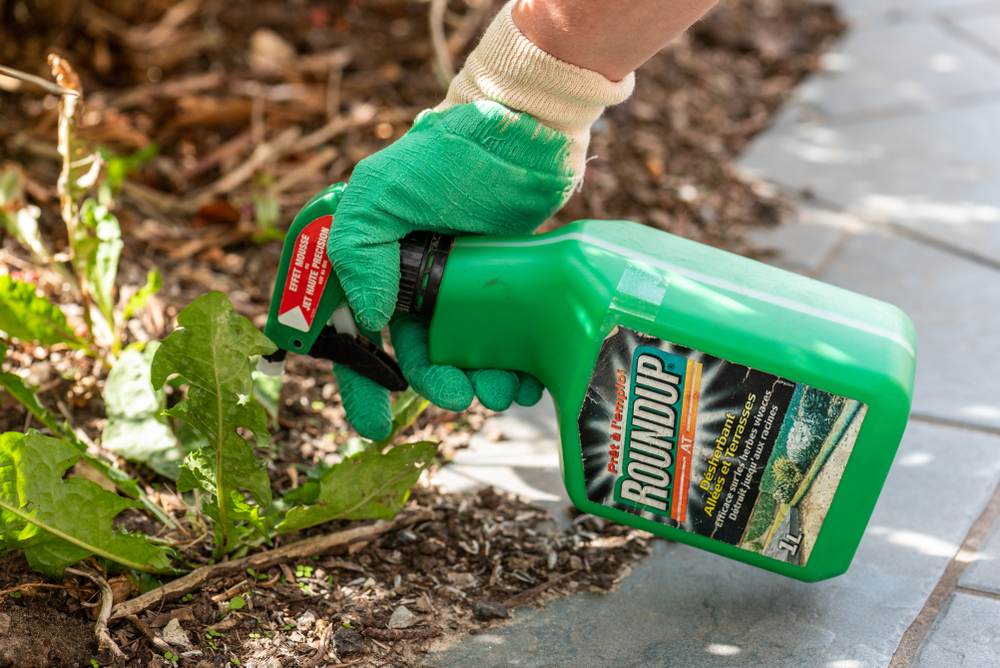 Bayer Considers Stopping the Retail Sale of Roundup