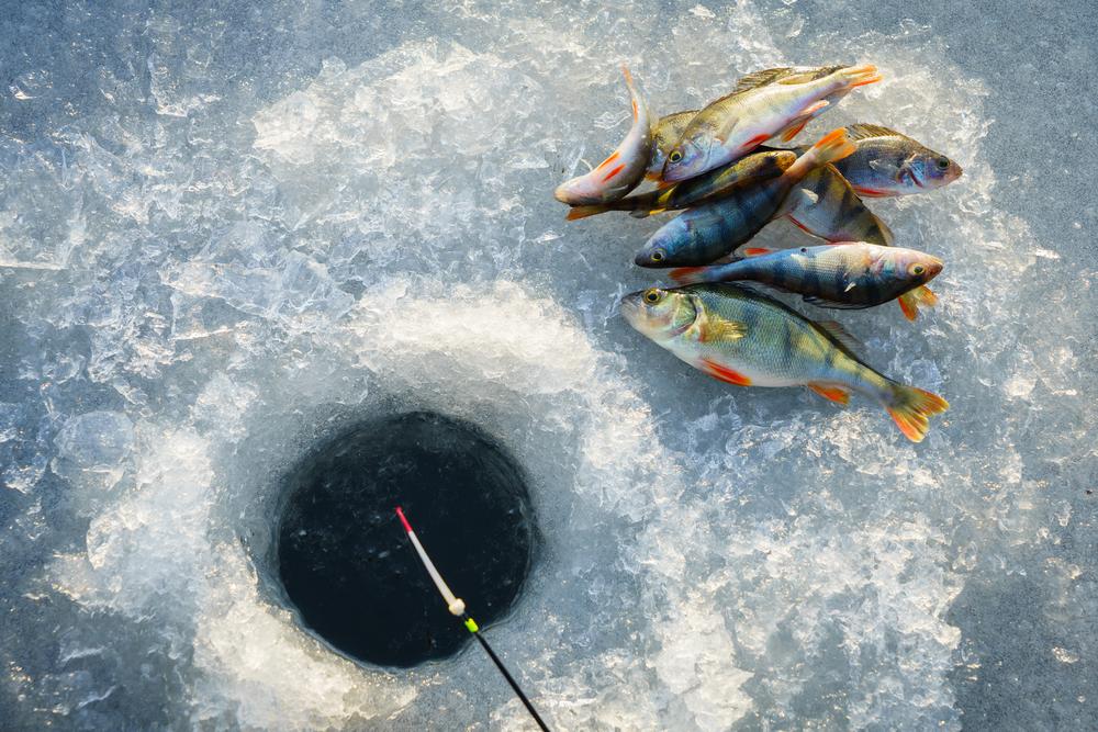 Image by Shutterstock American Fishing Men/'s Tee