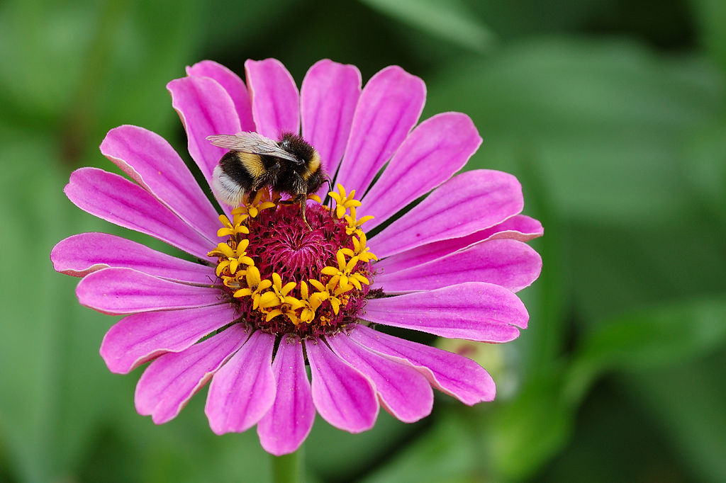 Pesticides Can Mess With Baby Bumblebee Brains, Says New Study