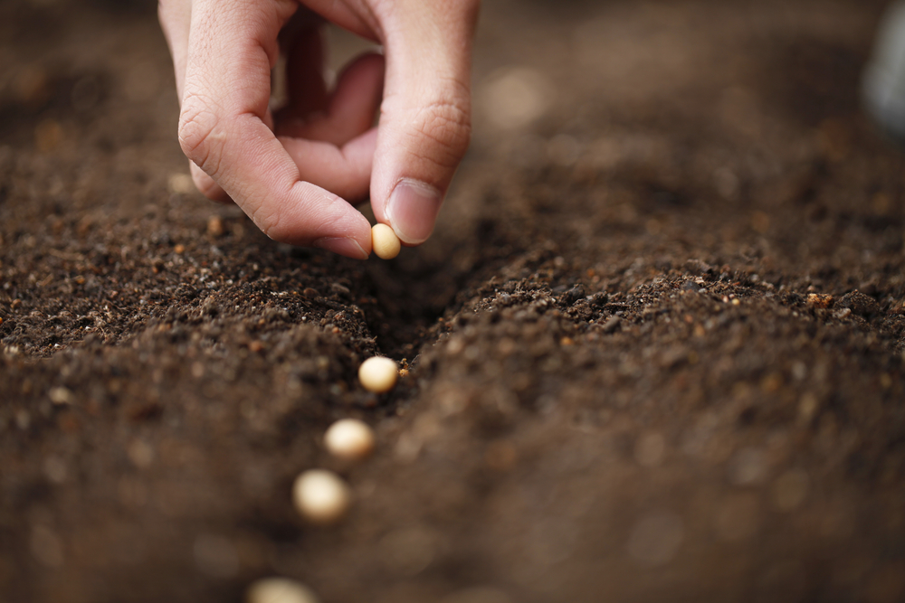 Be Prepared for a Possible Seed Shortage Shutterstock_130864808-1