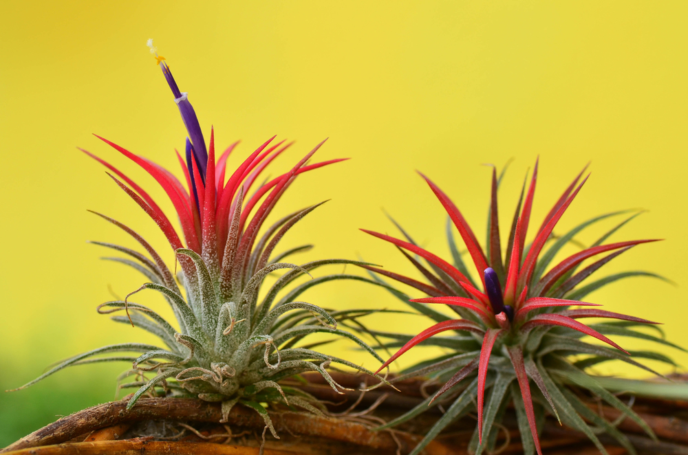 How to Take Care of Your Air Plants