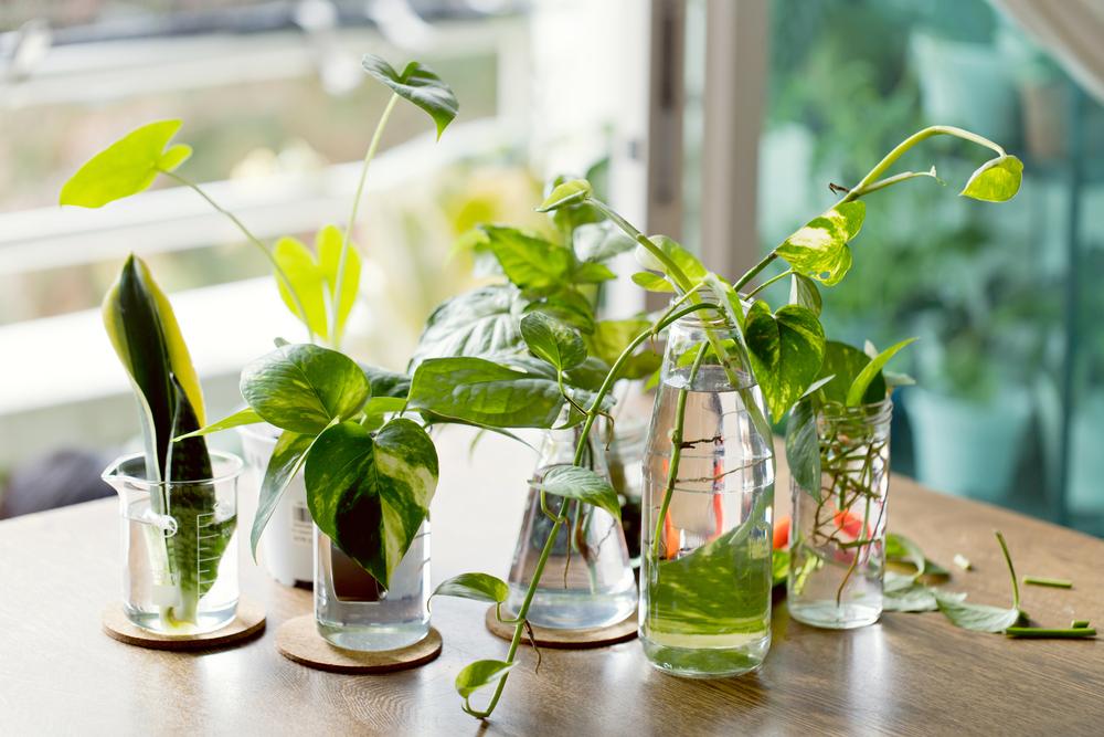 How to Propagate Your Houseplants   Modern Farmer