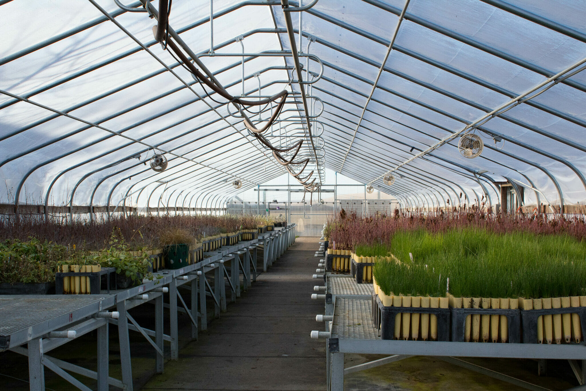 Indigenous Plant Nurseries Look to Revive Landscapes and Cultures