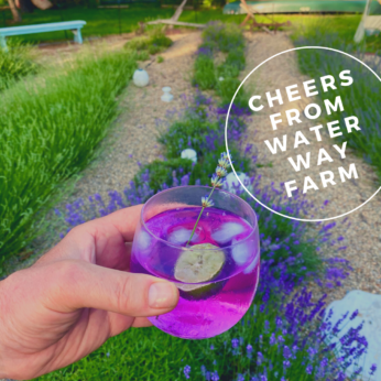 Cheers from wAter way farm copy.png